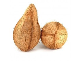 Coconut (With Tail)